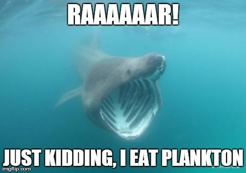 What can the funniest shark memes on the internetz teach us about ocean science and conservation?