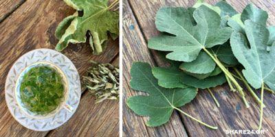 ΕΛΛΑΝΙΑ ΠΥΛΗ: Φύλλα Συκιάς – Οι Θαυμαστές Θεραπευτικές τους Ιδιότητές