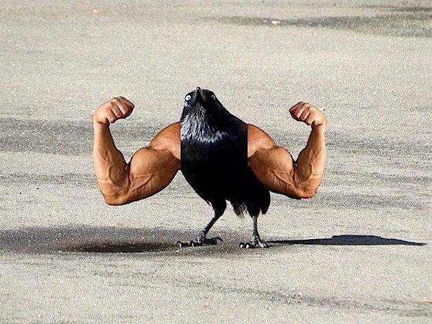 Vögel mit Armen