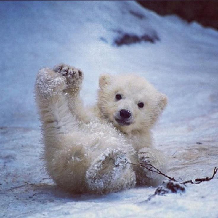Sledding | Teddy Bears | Pinterest | Animal, Adorable ...