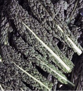 Kale Nero di Toscana sow march/april