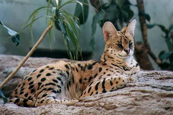 Animales híbridos mas impresionantes del mundo