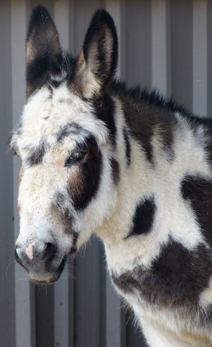 #Cookie @ Island Farm #Donkey Sanctuary