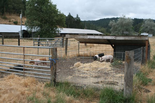 Pig Pen Builders From The Chicken Barns They Make A