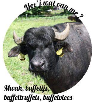 Ben je toch in Twente voor de Asperge tour, bezoek dan ook de Buffel boerderij voor bijvoorbeeld buffelmelk ijs, buffel truffel of buffelvlees