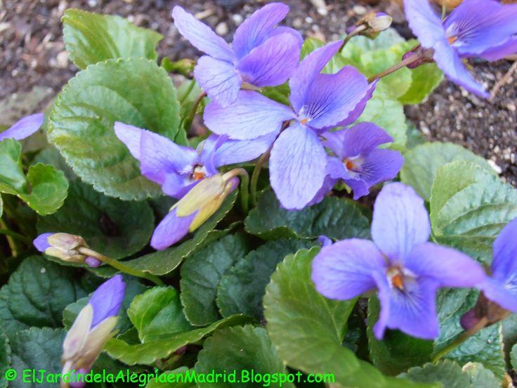 11 best plantas de invierno images on pinterest winter for Matas de jardin