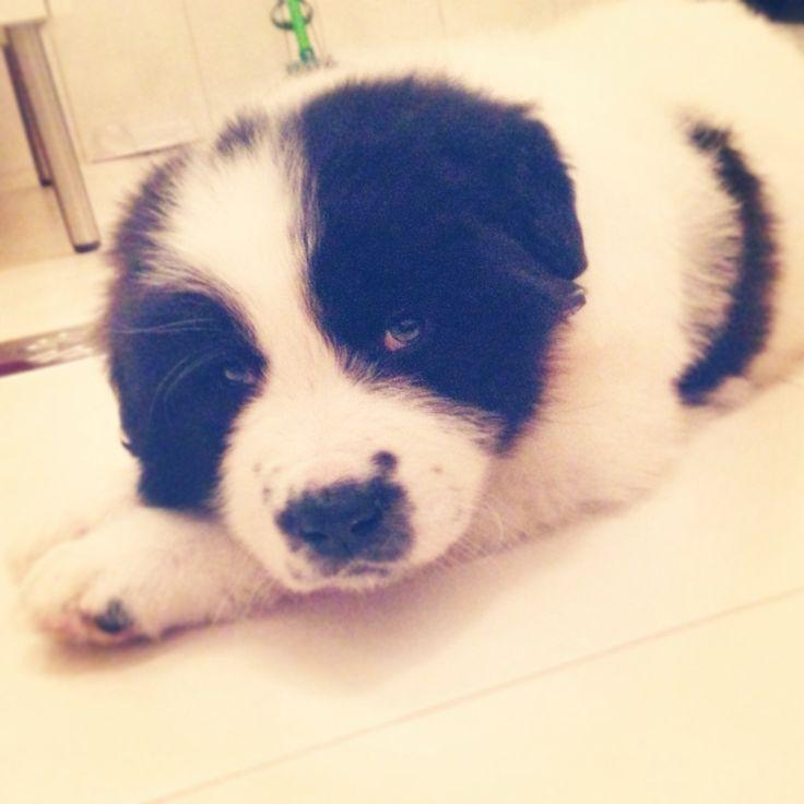 Little Ralph!