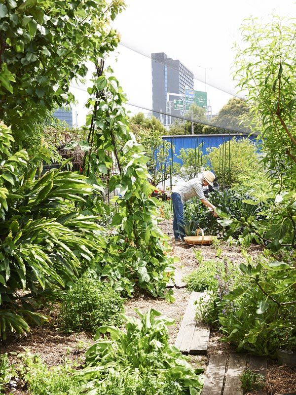 Anne tends to her impressive veggie patch at Capi Soda HQ in South Melbourne. Photo -Eve Wilson.