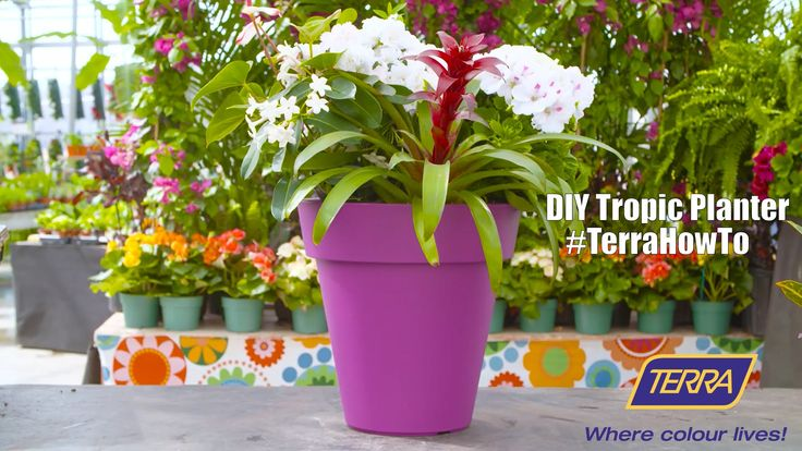 This week, Carson Arthur shows the best way to add some bright tropical colour to your next summer garden! #TerraHowTo  What You'll Need: Bromeliad, Martha Washington Geraniums, and Stephanotis!
