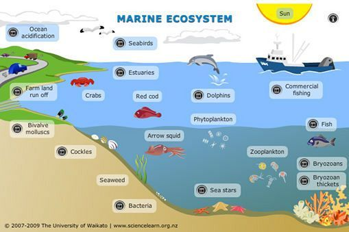 Explore this interactive diagram to learn more about life in the sea. Click on the different labels to view short video clips or images about different parts of the marine ecosystem.