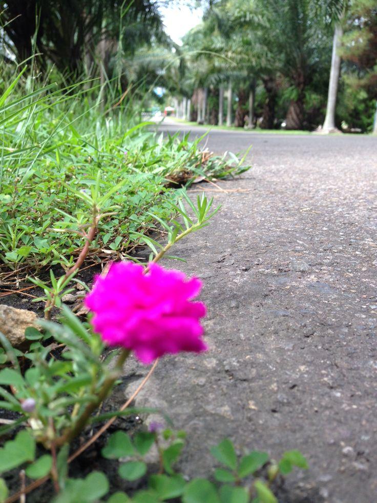 ...bunga di tepi jalan...