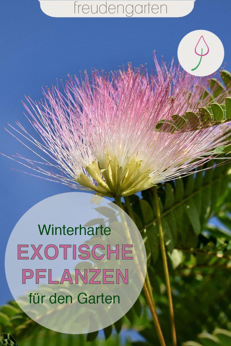 Exotische Pflanzen Im Garten Exotische Pflanzen Winterharte Pflanzen Garten Pflanzen