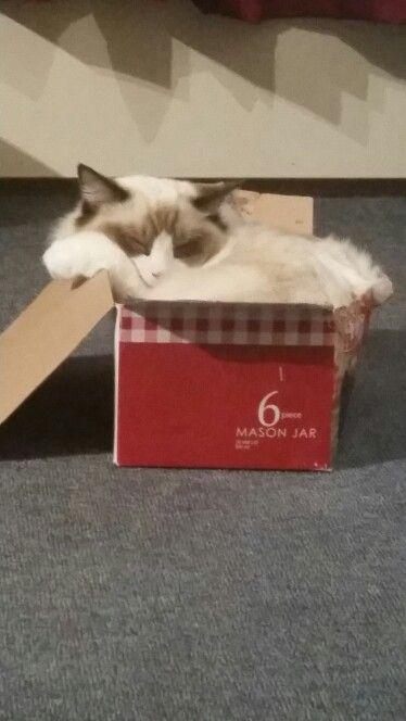 If it fits I sits! Lol