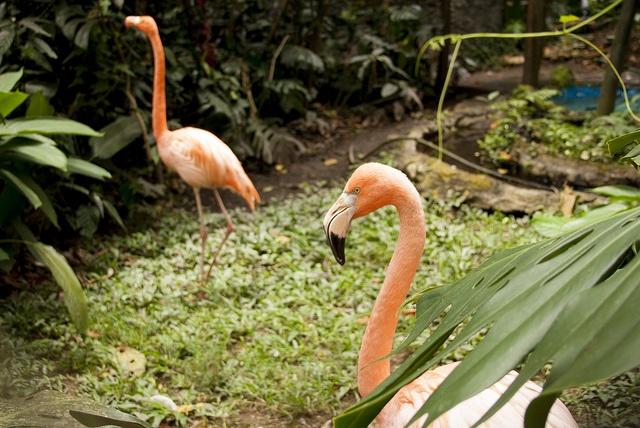 Flamingos by JessieRivera, via Flickr
