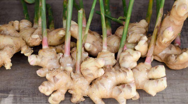 Ingwer - Das beliebte Gewürz aus der asiatischen Küche schmeckt nicht nur lecker, sondern kann auch bei Übelkeit, Halsweh, Verdauungsproblemen und sogar Entzündungen helfen!