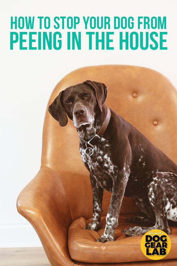 How To Stop Your Dog From Peeing In The House Dog Training Dog