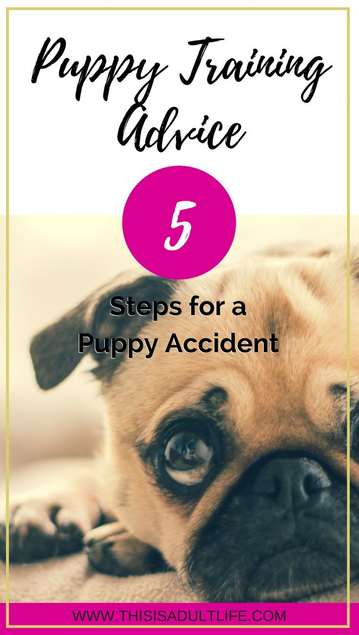 The Best Way To React To A Puppy Accident Puppy Training Puppy Training Tips Training Your Dog