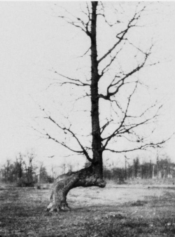"The Hidden Secrets Of Native American ""Marker Trees"" http://www.wimp.com/the-hidden-secrets-of-native-american-marker-trees/"