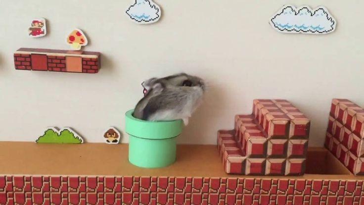 Youtube Nutzer yutako55 hat sich ein Super Mario Bros. Level en Miniatur nachgebaut und schickte seinen durchaus motivierten Hamster durch den Game-Nachbau