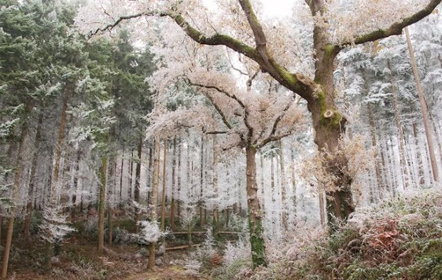Spring / Winter forest
