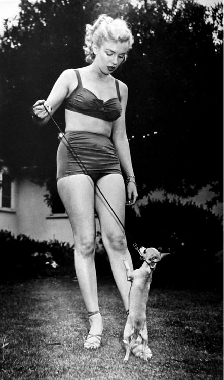 Marilyn Monroe pets