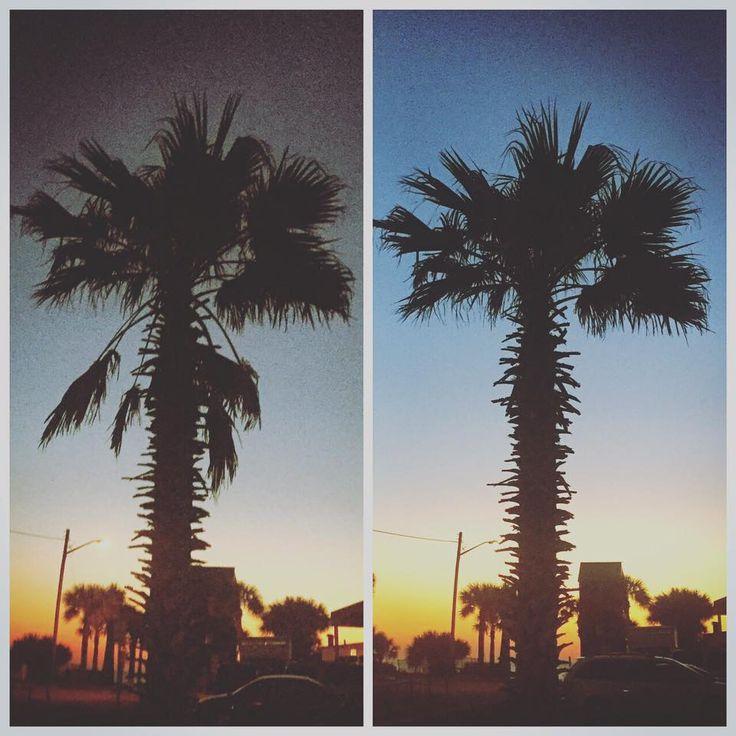 Palm Tree Trimming / Pruning