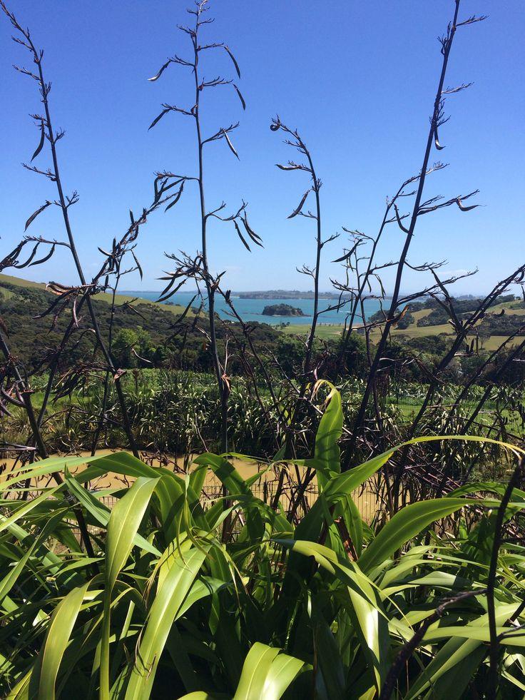 Waiheke Island & Vineyards