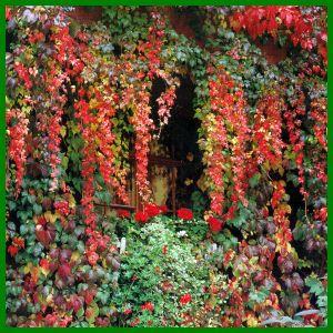 kletterpflanzen immergrün - Google-Suche