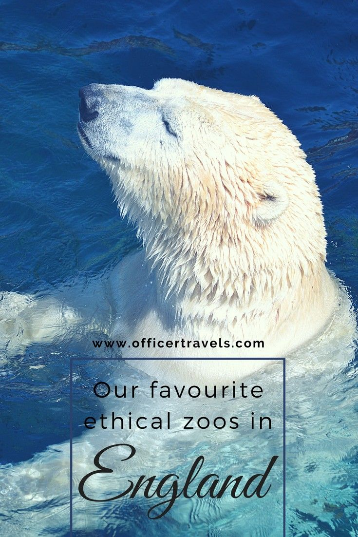 5 Ethical Zoos In England That You Should Visit Soon England Family Friendly Travel England Travel