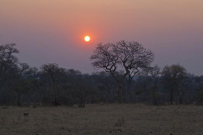 Sunset on Safari