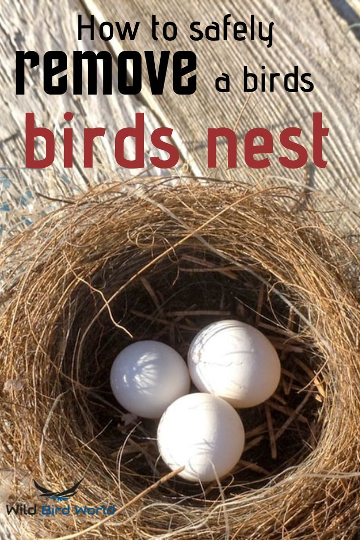 Removing A Bird S Nest Can Be Dangerous And Illegal Under Certain Circumstances Follow This Article To Know How To Bird Nest Removing Birds Attract Wild Birds