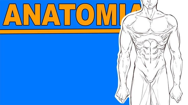 TUTORIAL - Disegnando L'ANATOMIA #7 - Il corpo Maschile 2a • RichardHTT