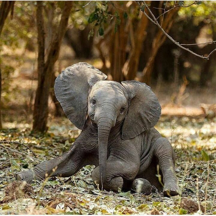 This just might be my favorite Elephant baby photo ‼️