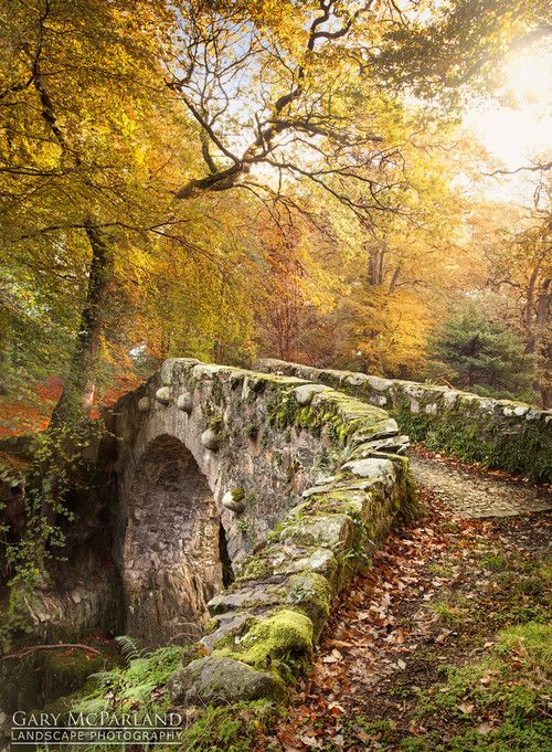 Medieval Bridge, Tollymore Forest, Ireland