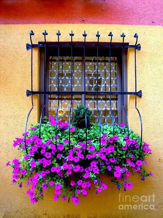 German Window Flower Boxes | German Window Flowerbox Photograph