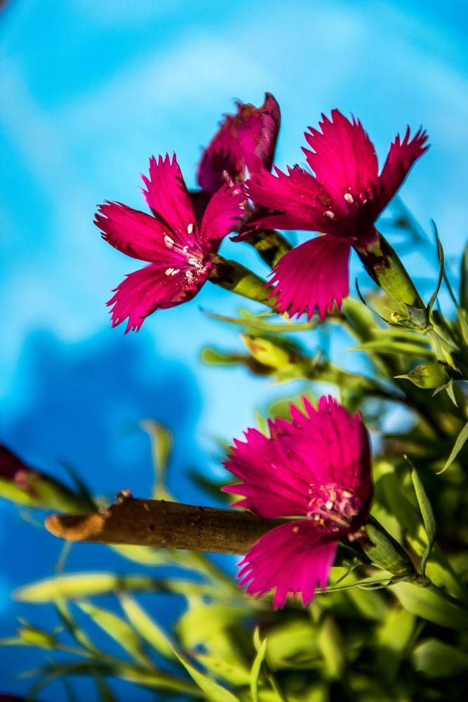 Little Red Flowers  by Titas Ghosh