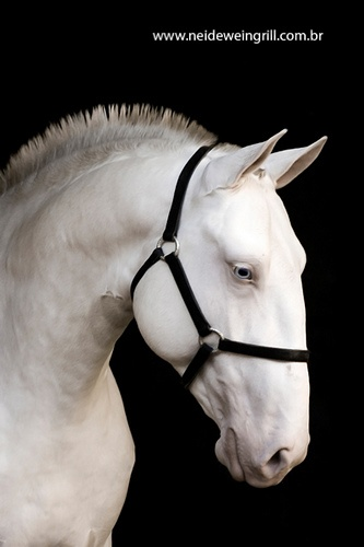 Lusitano Mare. This needs to become a unicorn.