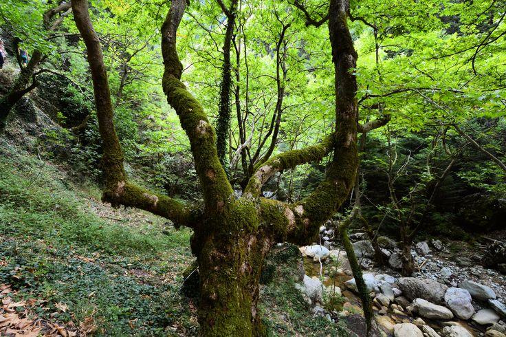 https://flic.kr/p/ynvRMb | Moss covered tree