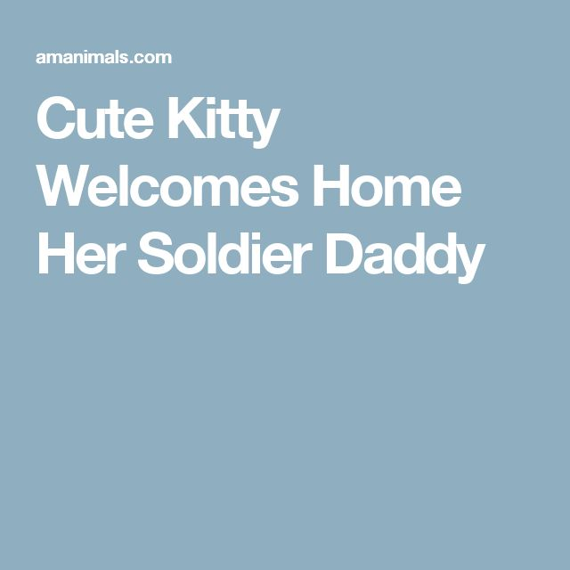 Cute Kitty Welcomes Home Her Soldier Daddy