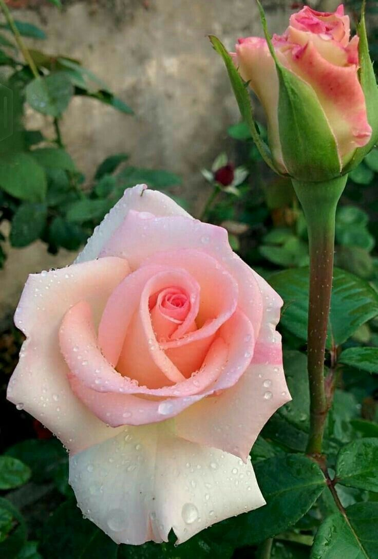 best flores images on pinterest paint painted flowers and