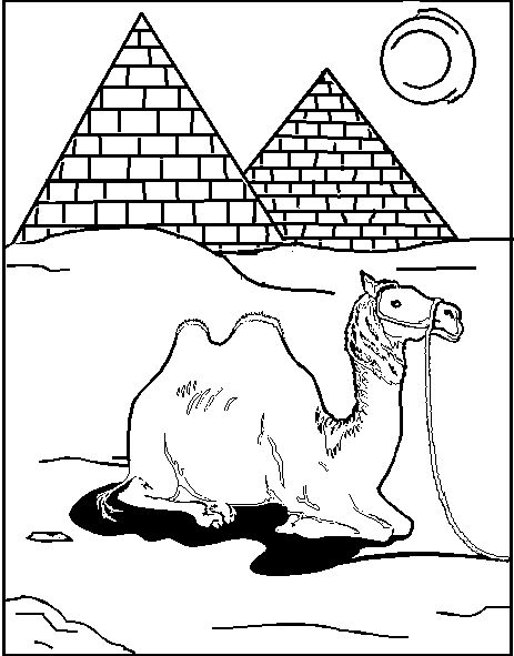 Camel Coloring Pages For Students