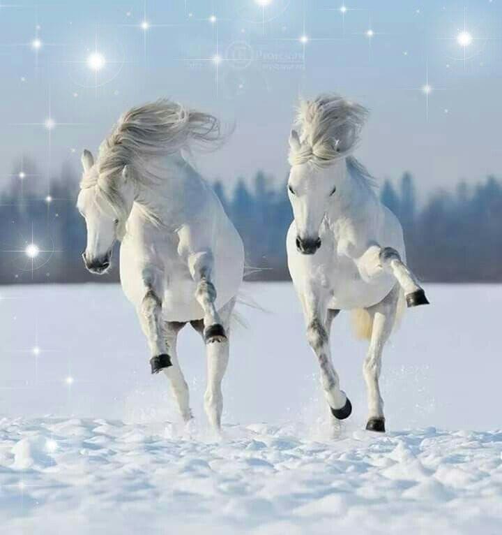 Pin Van Marichl P Op Hiver Winter Zima Et Autres Froids Paarden Mooie Paarden Witte Paarden
