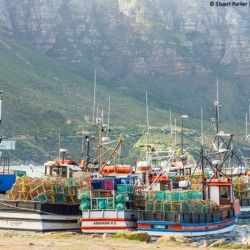 Traditional fishing boats in the Hout Bay harbour from my full day Cape Peninsula tour with Wilderness Touring
