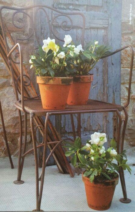 Un angolo di pace. Una vecchia sedia in ferro battuto, semplici vasi e fiori bianchi. #ville #flowers #white