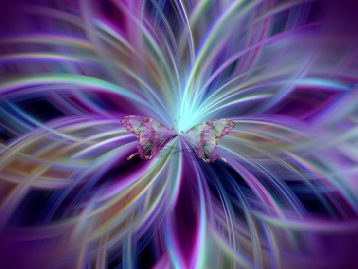 8 Best Purple Butterfly Images Images On Pinterest