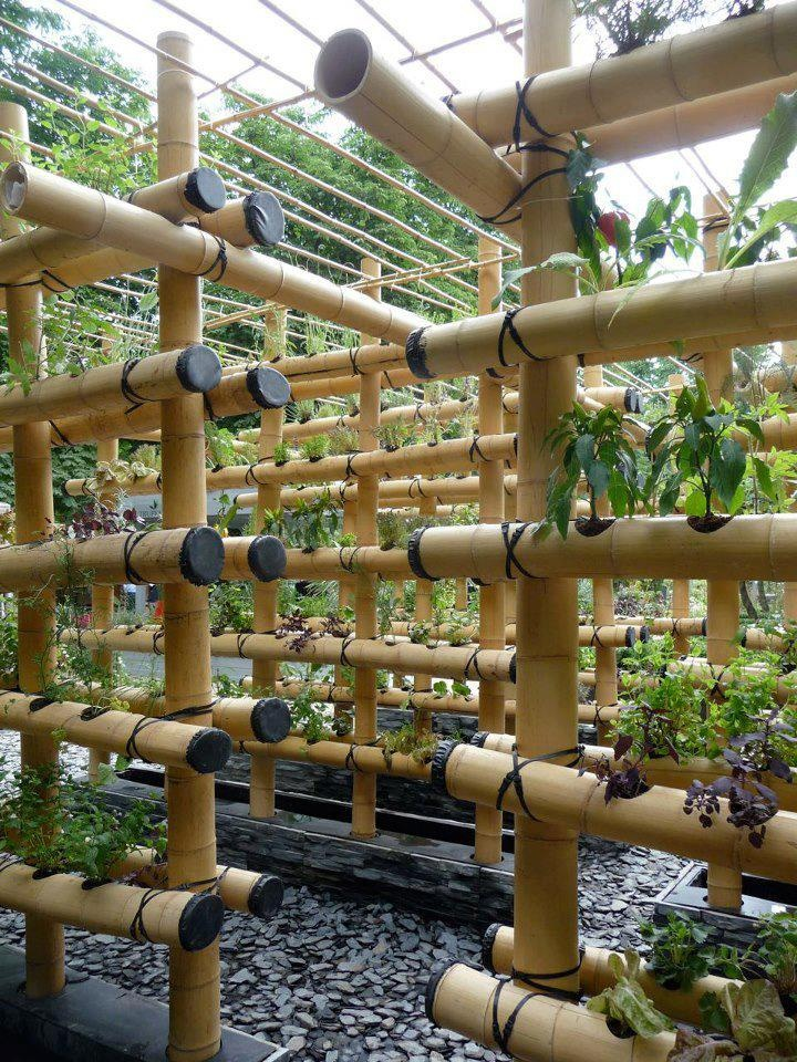 Growing Plants Vertically Using Bamboo would be good for an apartment or for backyard fence for more privacy!