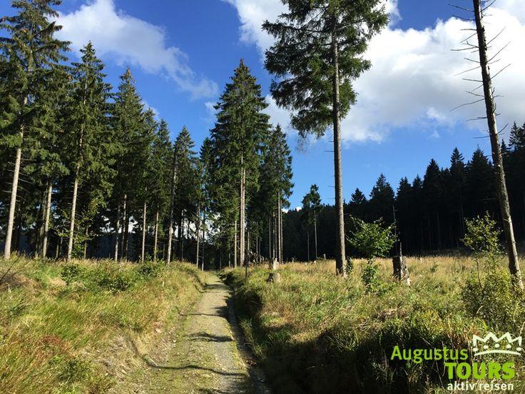 Schierke Altenau Torfhaus © AugusTours auf https://www.augustustours.de/de/wanderreisen/harz/harzer-hexen-stieg.html