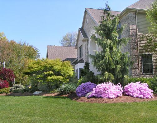Best 25 azaleas landscaping ideas on pinterest flowers for Professional landscape