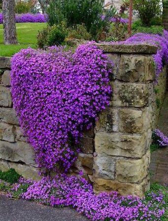 Purple Flowers On The Fence #flowers, https://apps.facebook.com/yangutu/