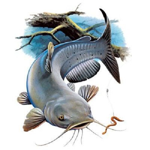 TSHIRT    Channel Catfish  Fishing   Tshirt  by AlwaysInStitchesCo